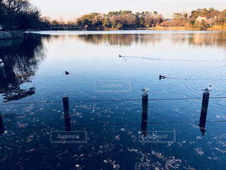 水の体の横にカモメの群れの写真・画像素材[944196]