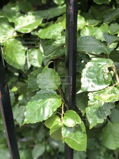 緑の植物のグループの写真・画像素材[1636004]