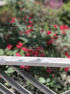近くの公園のベンチの写真・画像素材[1636005]