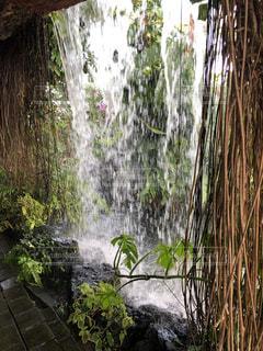 背景の木と滝の写真・画像素材[1788638]