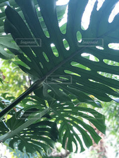 近くの緑の植物をの写真・画像素材[1788643]