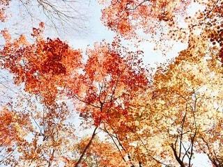 秋の写真・画像素材[4757691]