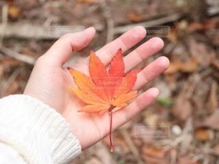 秋の写真・画像素材[4757757]