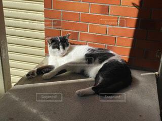 地面に横たわっている猫の写真・画像素材[4758077]