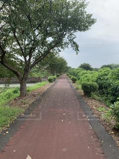 道路の脇に木がある道の写真・画像素材[4771983]