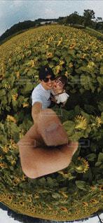 ひまわり畑の写真・画像素材[4758712]