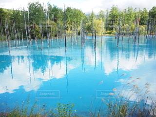 水の池の近くの写真・画像素材[4806084]