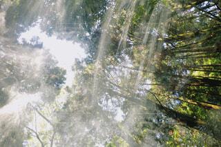 自然の写真・画像素材[4760805]