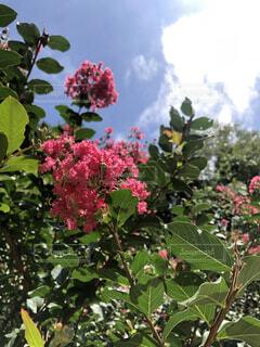 花の写真・画像素材[4761463]