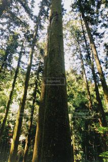 木の写真・画像素材[4761469]