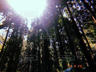 自然の写真・画像素材[4761471]