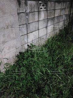 夏の夜に茂った草の写真・画像素材[4770615]