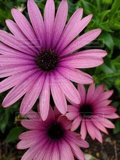 花のクローズアップの写真・画像素材[4760038]