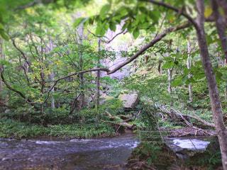 渓流と大自然の草木と陽の光の写真・画像素材[4763854]