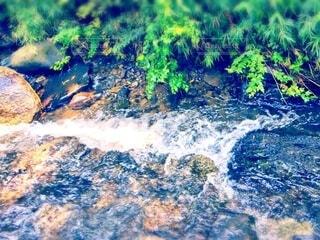 夏の小川の流れと風を感じる草木の写真・画像素材[4768983]
