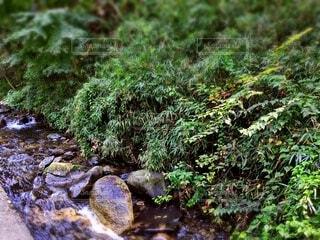 涼しい風と水の流れ 青々とした草木の写真・画像素材[4769018]