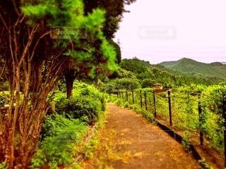 山へと通じる一本道と木々の写真・画像素材[4769783]