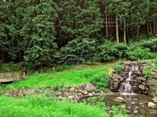 緑豊かな草木と水の流れの写真・画像素材[4769797]