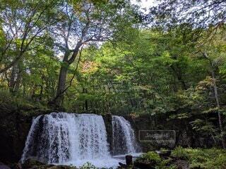 自然豊かな森林の中にあるちょっとした滝の写真・画像素材[4803811]