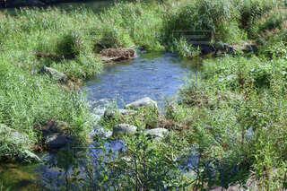 草木が豊かな場所を流れる小さな川の風景写真の写真・画像素材[4841945]