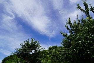 空と緑の写真・画像素材[4768806]