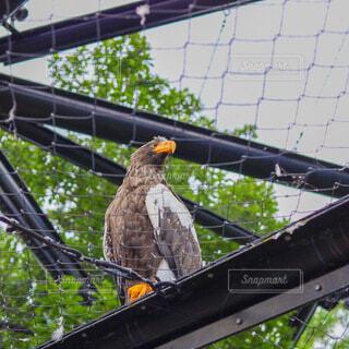 鷹のクローズアップの写真・画像素材[4925211]