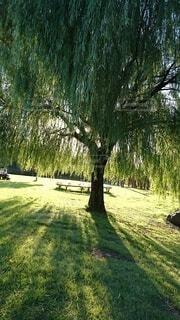 癒される木陰の写真・画像素材[4766628]