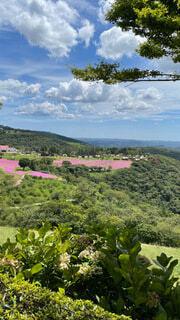 丘から望む夏の一コマの写真・画像素材[4763115]