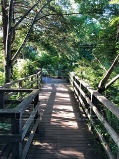 緑豊かな遊歩道の写真・画像素材[4763596]