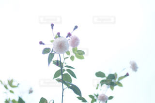 自然 - No.213695
