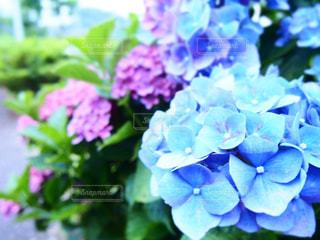 No.446832 花