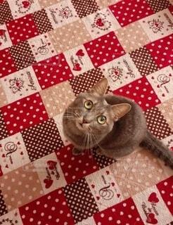 上を見上げる猫の写真・画像素材[4762440]