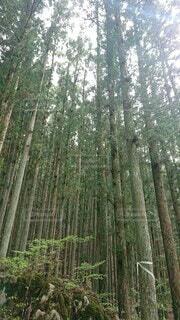 どこまでも続く林の写真・画像素材[4762475]