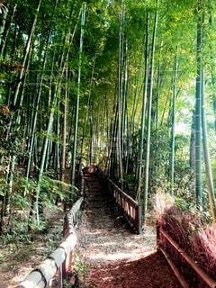 竹林の散歩道の写真・画像素材[4763679]