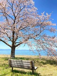 湖が見えるベンチの写真・画像素材[4762492]