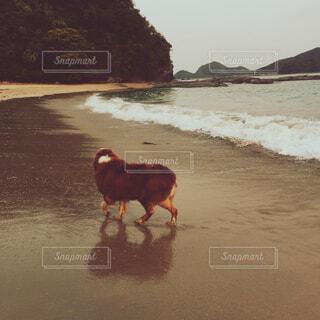 押し寄せる波と砂浜を歩く犬の後ろ姿の写真・画像素材[4781102]
