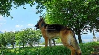 鮮やかな緑の木の下で佇む犬の写真・画像素材[4801627]