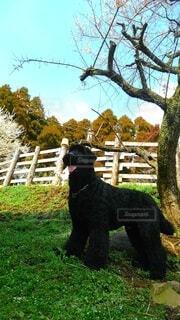 木の前の草の上に立っている犬の写真・画像素材[4801625]