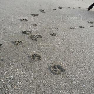 砂浜に残る犬の足跡の写真・画像素材[4801624]
