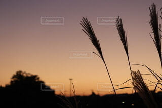 秋の写真・画像素材[4835139]