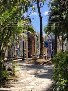 サーフボードにヤシの木 ハワイには良く似合いますの写真・画像素材[4763513]