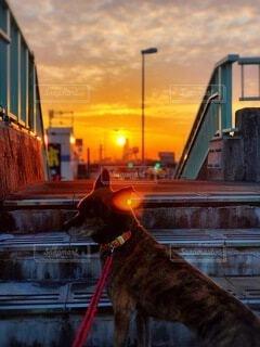 夕日に犬の写真・画像素材[4787274]