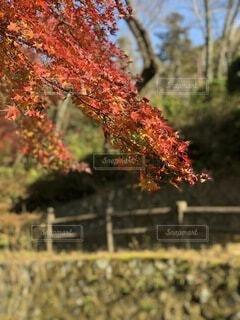 秋の季節の写真・画像素材[4787518]