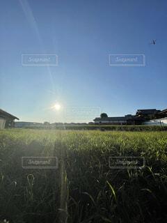 秋の空とトンボの写真・画像素材[4797136]