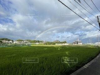 広い田んぼに虹の写真・画像素材[4805231]