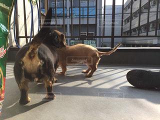 犬の写真・画像素材[213503]
