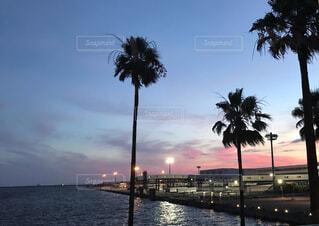大阪港の夜景(海外ビーチ風)の写真・画像素材[4765146]