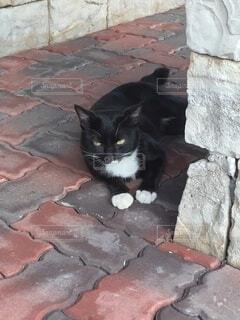 レンガの上に横たわってる黒猫の写真・画像素材[4773824]