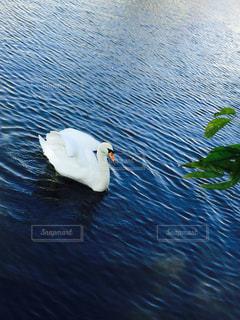 自然の写真・画像素材[254143]