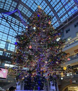 クリスマスツリーの写真・画像素材[4764591]